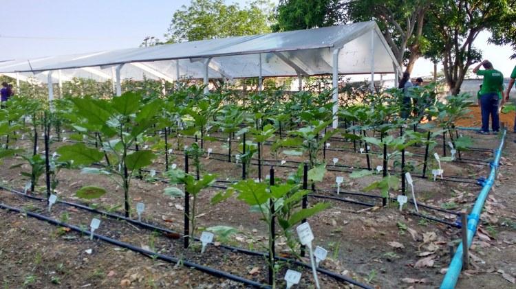 IFAM CMZL implanta Estação Experimental de Hortaliças
