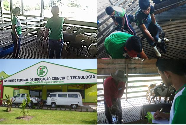Estudantes do IFAM Campus Parintins realizam atividade de Controle Zootécnico na Chácara Aninga.