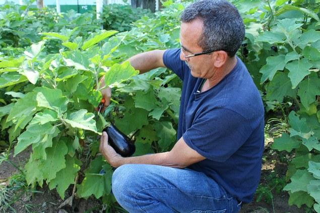 Estação experimental do CMZL produz hortaliças sem agroquímicos
